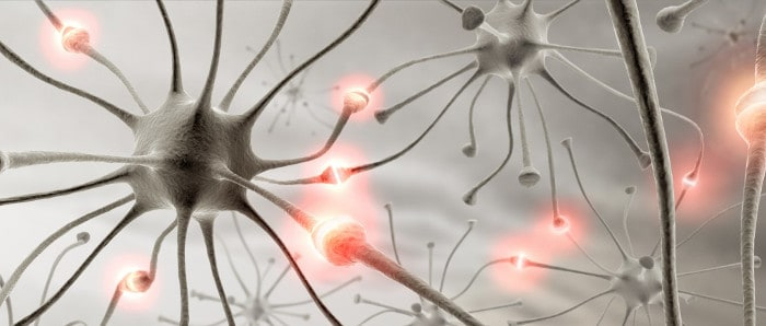 GABA regulates communication between brain cells