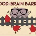 What is the Blood Brain Barrier?